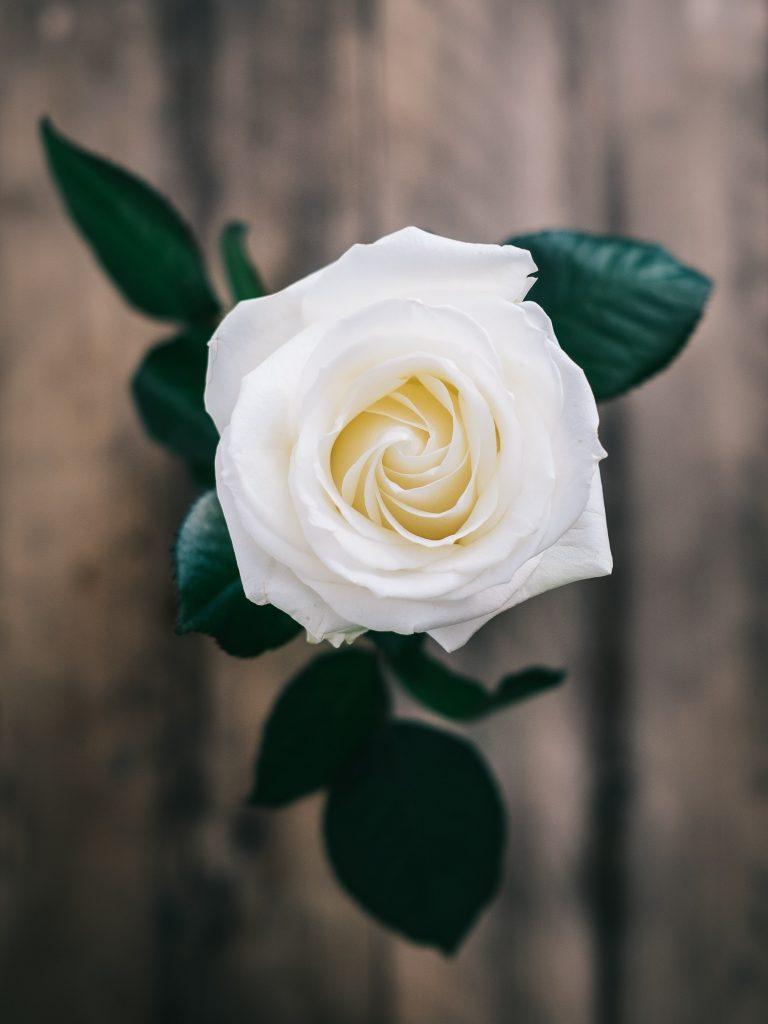 タイ・バンコクのお花屋さん