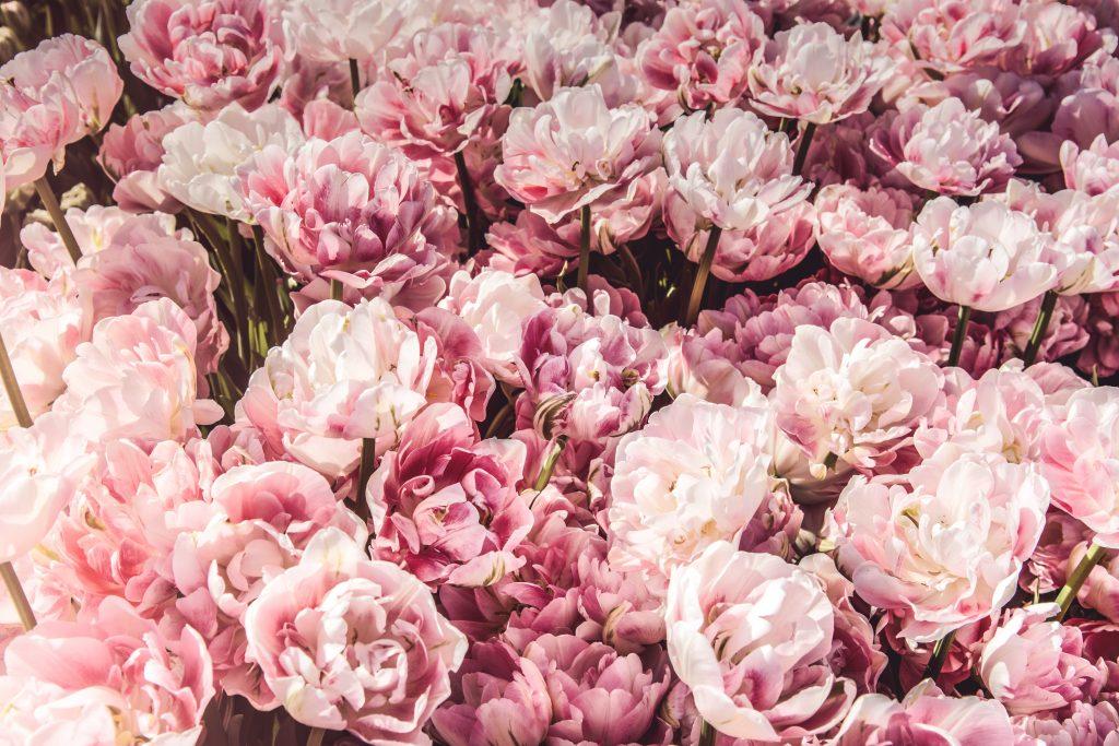 バンコクの花市場   パークローン市場の営業時間