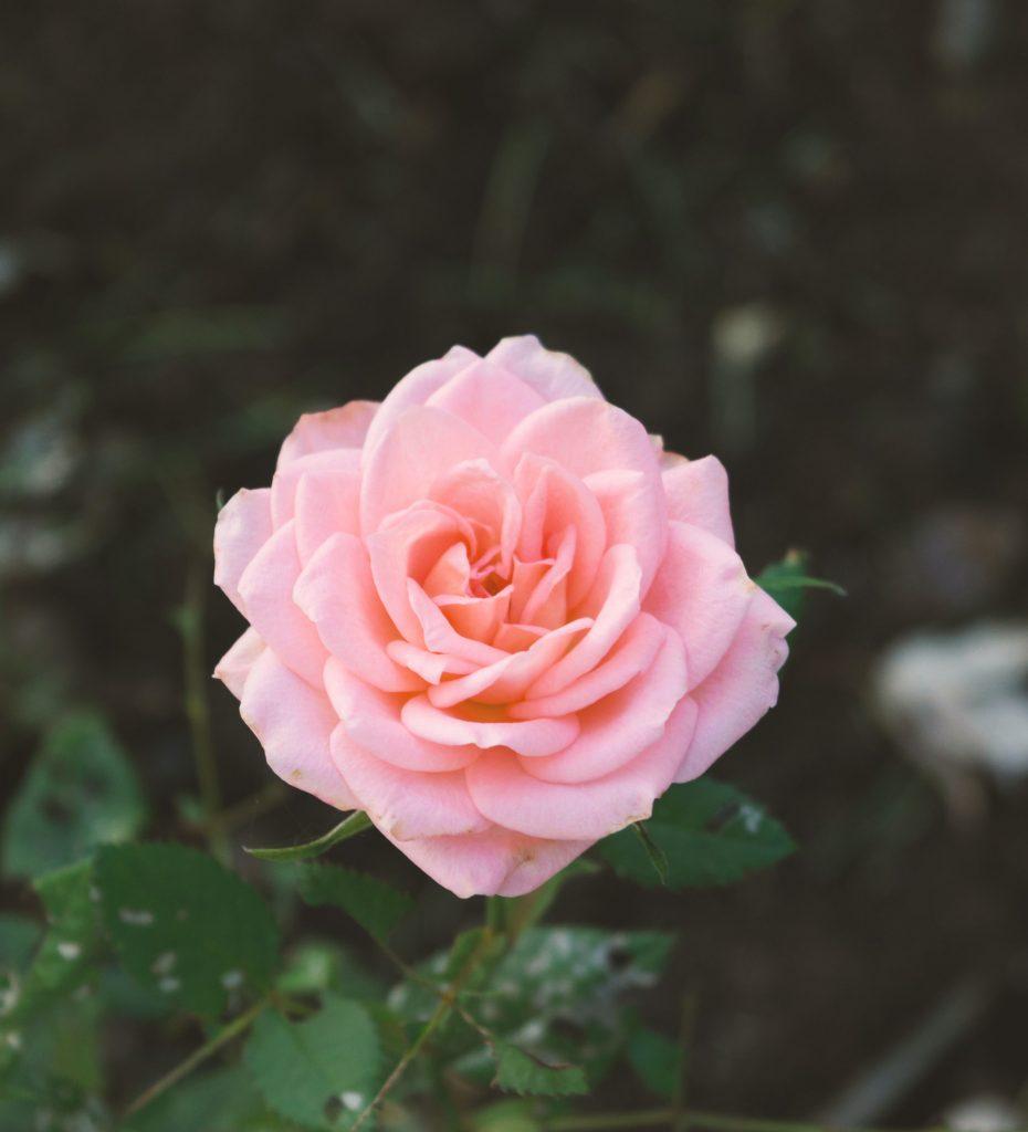 バンコクの花屋の探し方