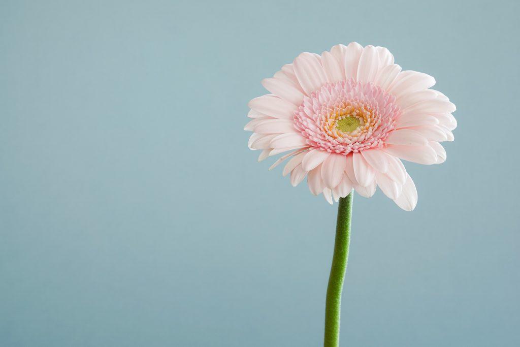 バンコクでのお花屋さん事情